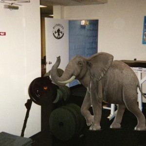 Addressing The Elephant In The Room!