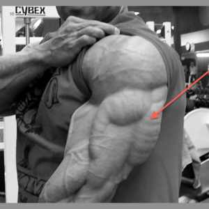Joe D's Top 7 Exercises for Building Strong, Horseshoe-like Triceps!